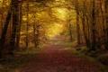 Картинка осень, парк, аллея
