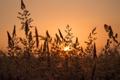 Картинка закат, луг, травинки