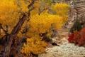 Картинка осень, камни, русло