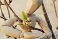 Картинка цветок, настроение, романтика, человек, весна, деревянный