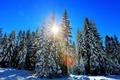 Картинка зима, лес, солнце, деревья, елки