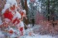 Картинка лес, природа, Autumn Snow