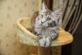 Картинка кошка, фотограф, photography, photographer, Евгений Апин, Evgeniy Apin