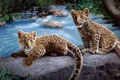 Картинка камни, Река, леопард, котята
