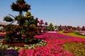 Картинка цветы, дизайн, парк, газон, дорожки, сад, Dubai