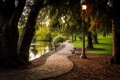 Картинка деревья, парк, река, фонарь, аллея