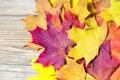Картинка осень, листья, желтые, оранжевые, клен, бордовые