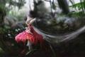 Картинка лес, капли, букашка, роса, гриб, паутина, фея