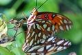 Картинка природа, бабочка, насекомое, мотылек