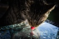 Картинка язык, капли, кот, вода, лижет, свет, стекло