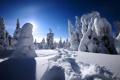 Картинка зима, дорога, лес, небо, снег, деревья, пейзаж