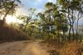 Картинка дорога, солнце, деревья, природа