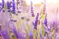 Картинка пчела, лето, макро, цветы