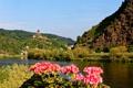 Картинка лес, цветы, горы, река, замок, берег, Германия