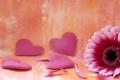Картинка цветок, цветы, фон, розовый, widescreen, обои, сердце