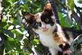 Картинка листва, котёнок, на дереве