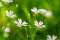 Картинка трава, цветы, растение, лепестки