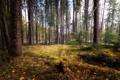 Картинка природа, лес, деревья