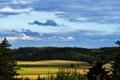Картинка поле, лес, трава, облака, деревья, ель