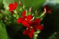 Картинка листья, макро, растение, лепестки, соцветие