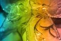Картинка цвета, макро, узоры