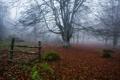 Картинка осень, лес, туман