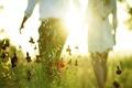 Картинка поле, лето, свет, настроение