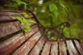 Картинка зелень, природа, скамья