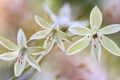 Картинка макро, растение, лепестки