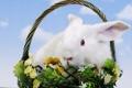 Картинка цветы, корзина, кролик, пасха, easter