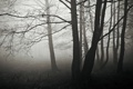 Картинка лес, осень, ветки, силуэты, дерево, стволы, деревья