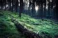 Картинка лес, деревья, мох