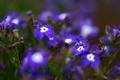 Картинка лето, трава, цвета, макро, цветы, поляна, растения