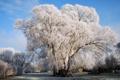 Картинка зима, иней, снег, дерево, Природа