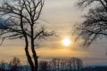 Картинка деревья, закат, провода