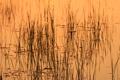 Картинка трава, вода, пруд, растение, блик