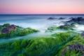 Картинка водоросли, камни, розовое, утро, море
