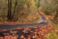 Картинка дорога, осень, лес, листья, деревья, кусты