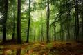 Картинка лес, листья, вода, деревья, туман