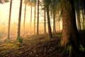 Картинка лес, свет, природа, дерево
