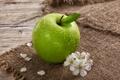 Картинка цветы, капельки, лепестки, фрукт, зеленое яблоко