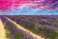 Картинка небо, облака, поля, простор, зарево, лаванда
