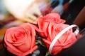 Картинка розовый, розы, романтика