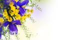 Картинка цветы, ирисы, хризантемы