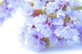 Картинка цветы, нежность, лепестки, хрупкость