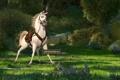 Картинка maximus, максимус, мультфильм рапунцель, конь
