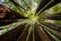 Картинка лес, небо, деревья, листва