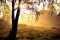 Картинка природа, свет, утро, дерево