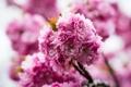 Картинка flower, розовый, Цветок, макро