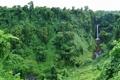 Картинка листья, деревья, водопад, Густая зелень